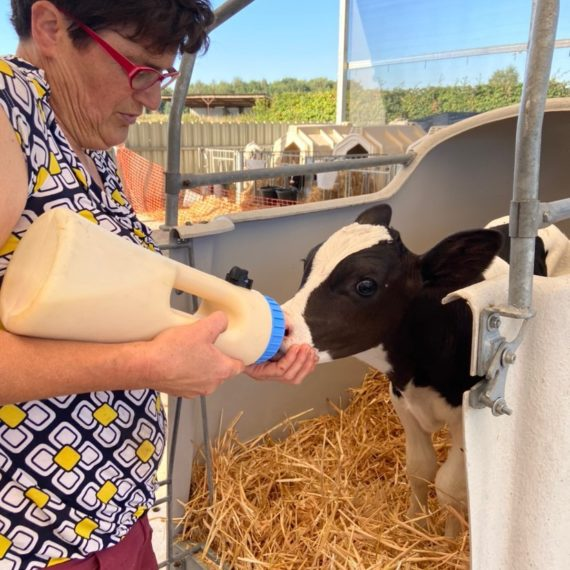 Farmer Annick feeds a calf.
